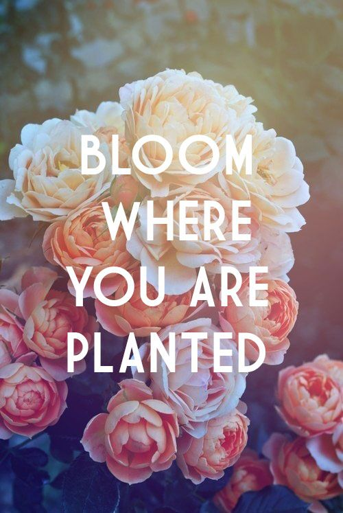bloom-where-you-are-planted